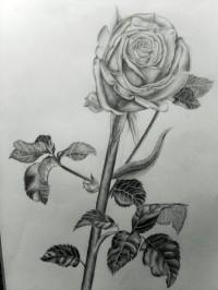 Rose-by-Debasis-Rath