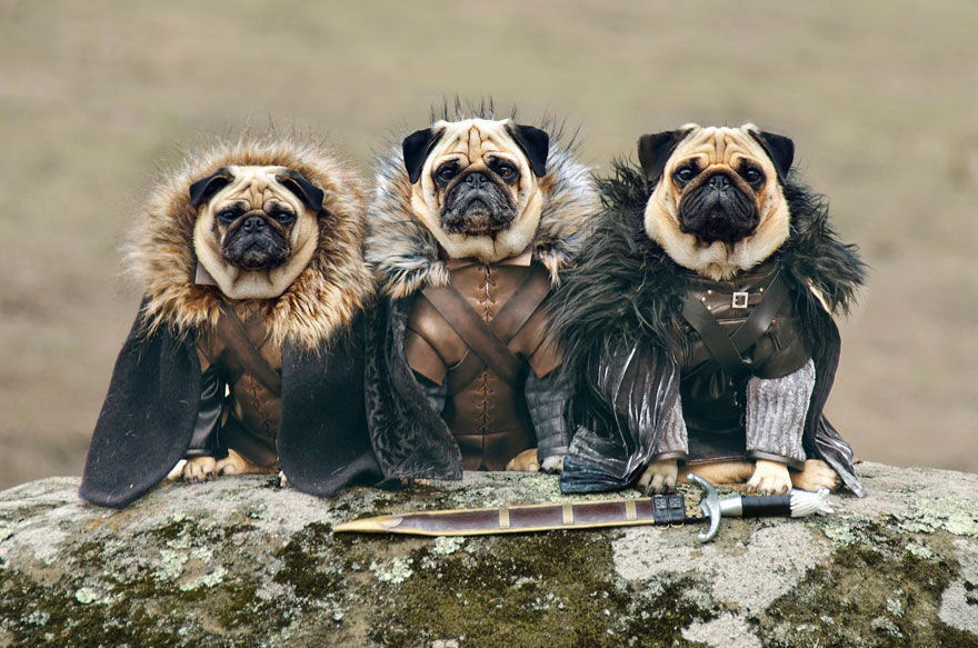 Robb Stark, Ned Stark and Jon Snow