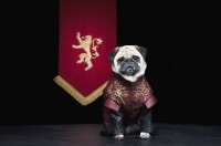 Tyrion Lannister (pugs are short and bow-legged, much like Tyrion himself)