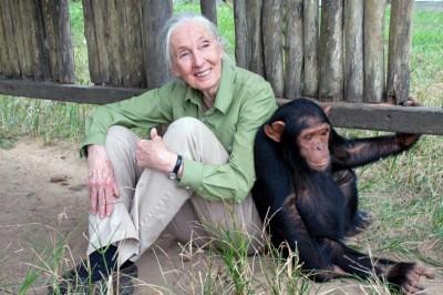 Dr Jane Goodall photo